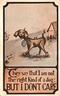 kindofdogshinn