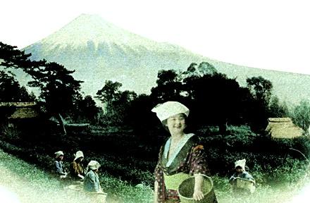Miss Tokimatsu